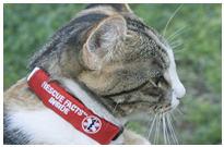 Click here to view the Rescue Facts™ ID Wrap for Small Pets